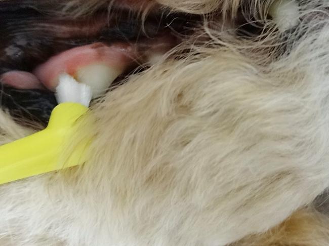 杏の右上の歯