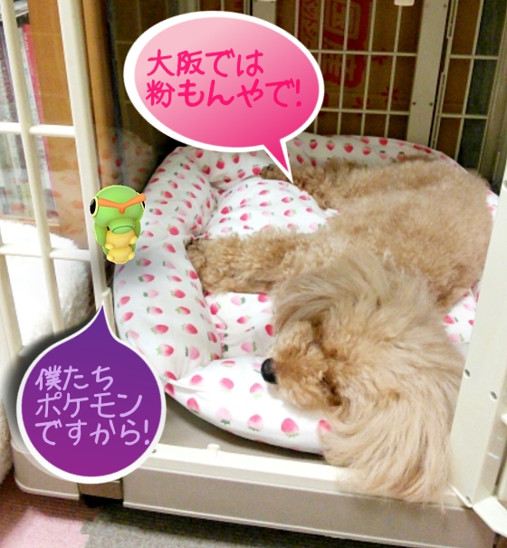 杏、大阪では粉もんやで! キャタピー、僕たちポケモンですから!
