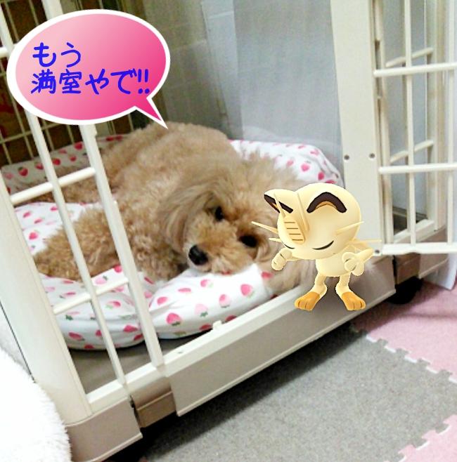 杏、もう満室やで!!