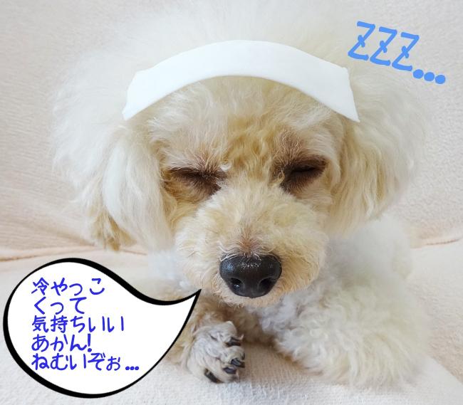 冷やっこくって気持ちいい!あかん、眠いぞ!
