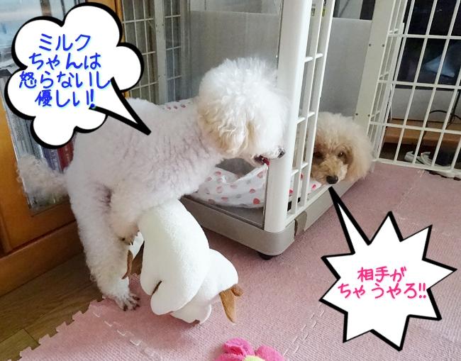 諭吉「ミルクちゃんは、怒らないし優しい!!」杏「相手がちゃうやろ!!」