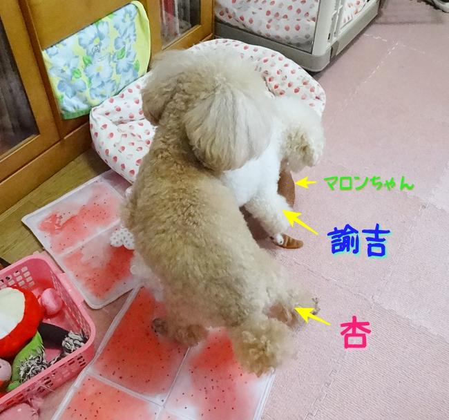 マロンちゃん、諭吉、杏の3段マウンティング