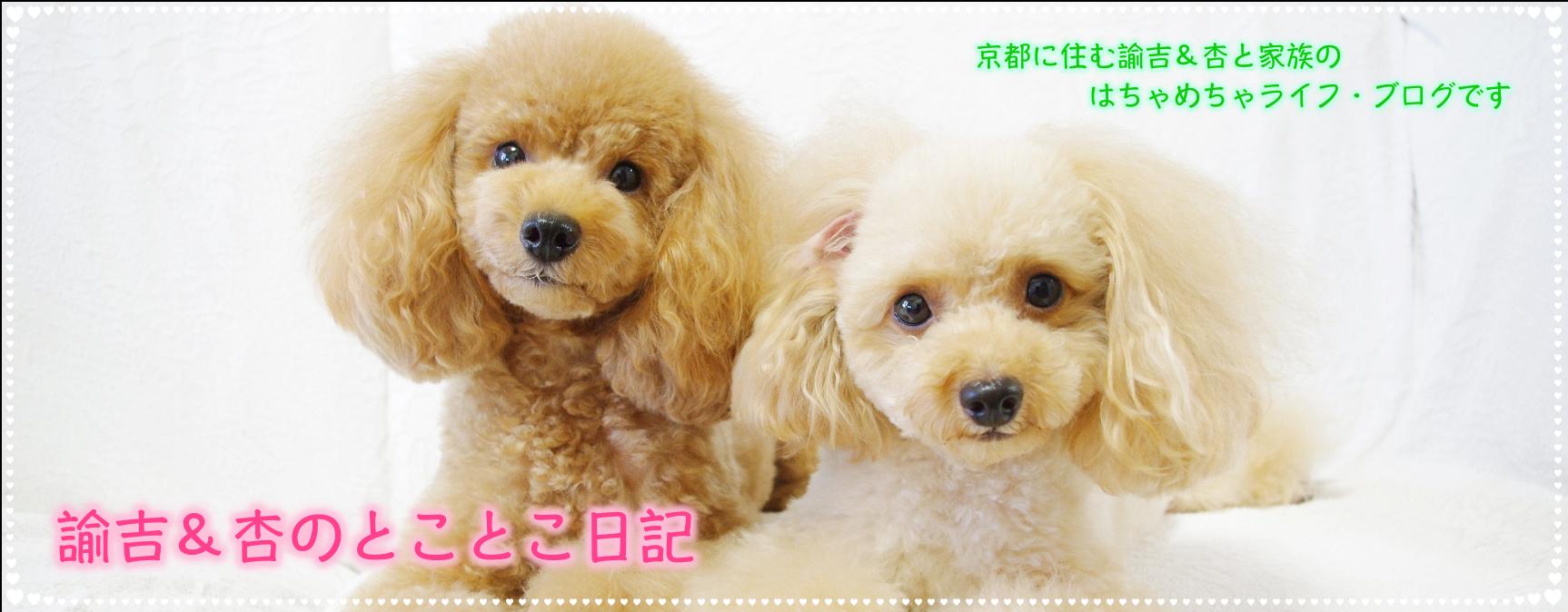 諭吉&杏のとことこ日記|トイプードル ブログ