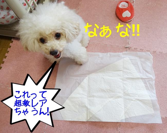 犬のトイレシート、なぁな!これって超激レアとちゃうん!