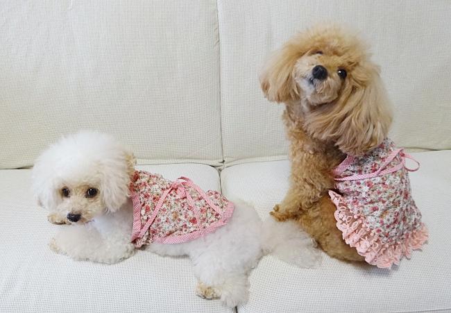 ピンクの花柄キャミソール、諭吉&杏のお揃いのわんこ服