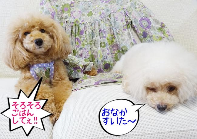 杏「そろそろ、ごはんしてや!」諭吉「おなかすいた〜」