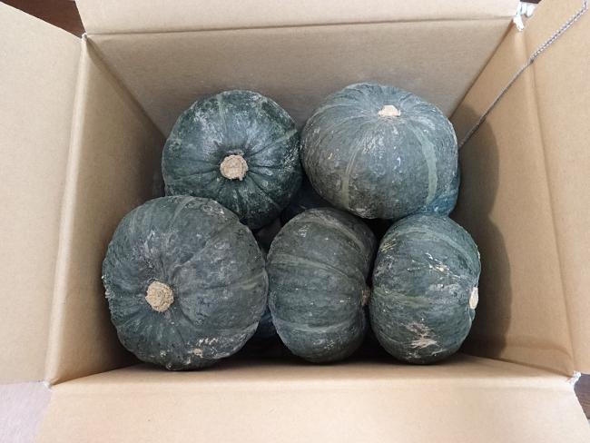 北海道の有機かぼちゃ
