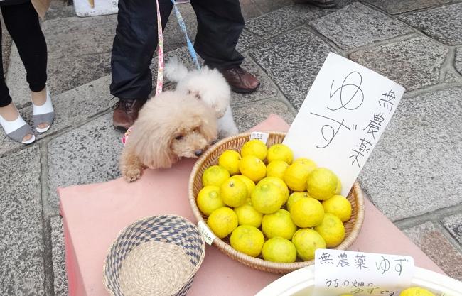 無農薬の京都産の柚と杏