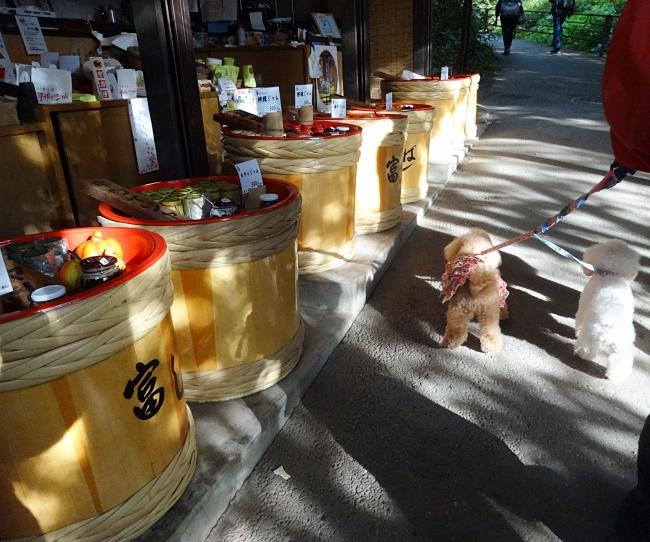 京都、大原三千院で歩く諭吉と杏