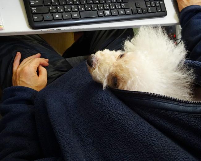 パソコン机で旦那とカンガルーの諭吉