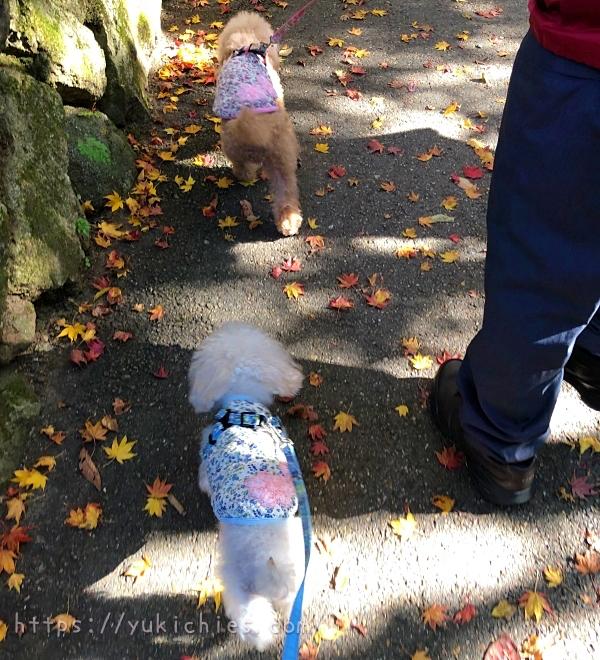 京都大原三千院の参道をお散歩