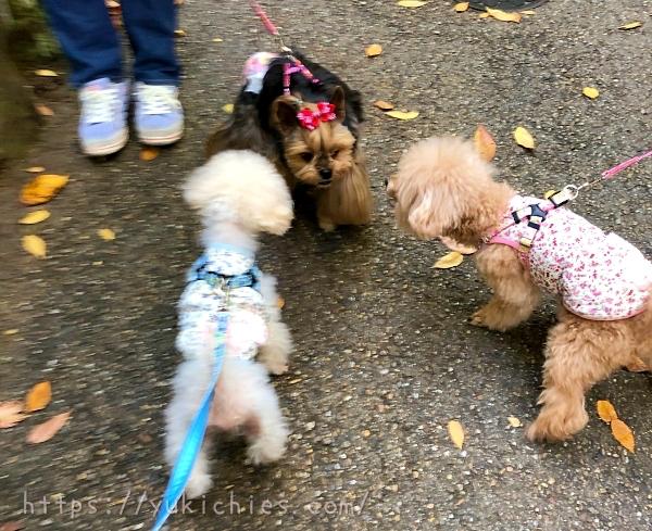 京都大原三千院の参道で犬たち