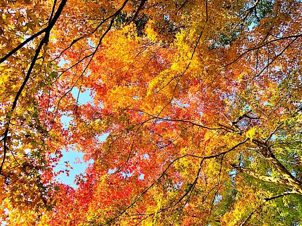 京都大原の紅葉