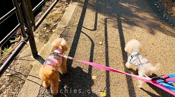 秋の京都大原三千院の参道