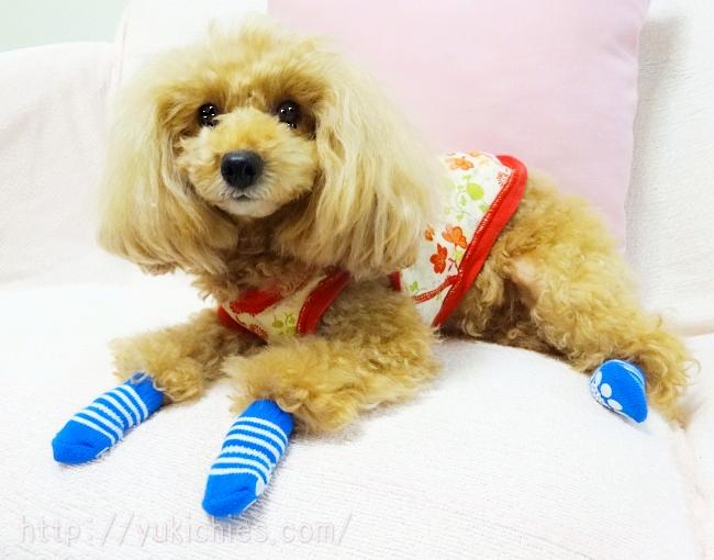 100円ショップダイソーの犬の靴下