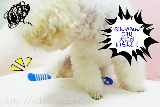犬の靴下、諭吉「なんやねん、これ!犬にはいらん!!」