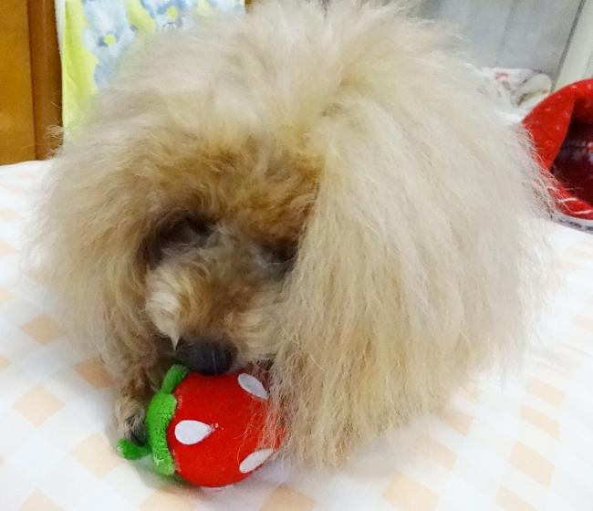 iDogのいちごちゃんの犬のおもちゃ