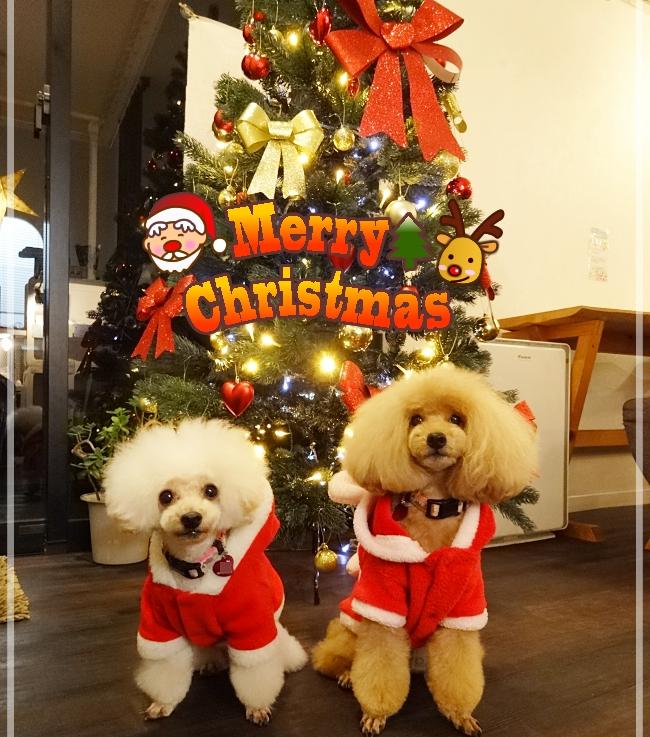 クリスマスツリーの前でMerry Christmas