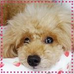 杏のプロフィール写真
