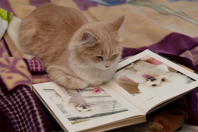 photofunia、合成写真のネコの絵本