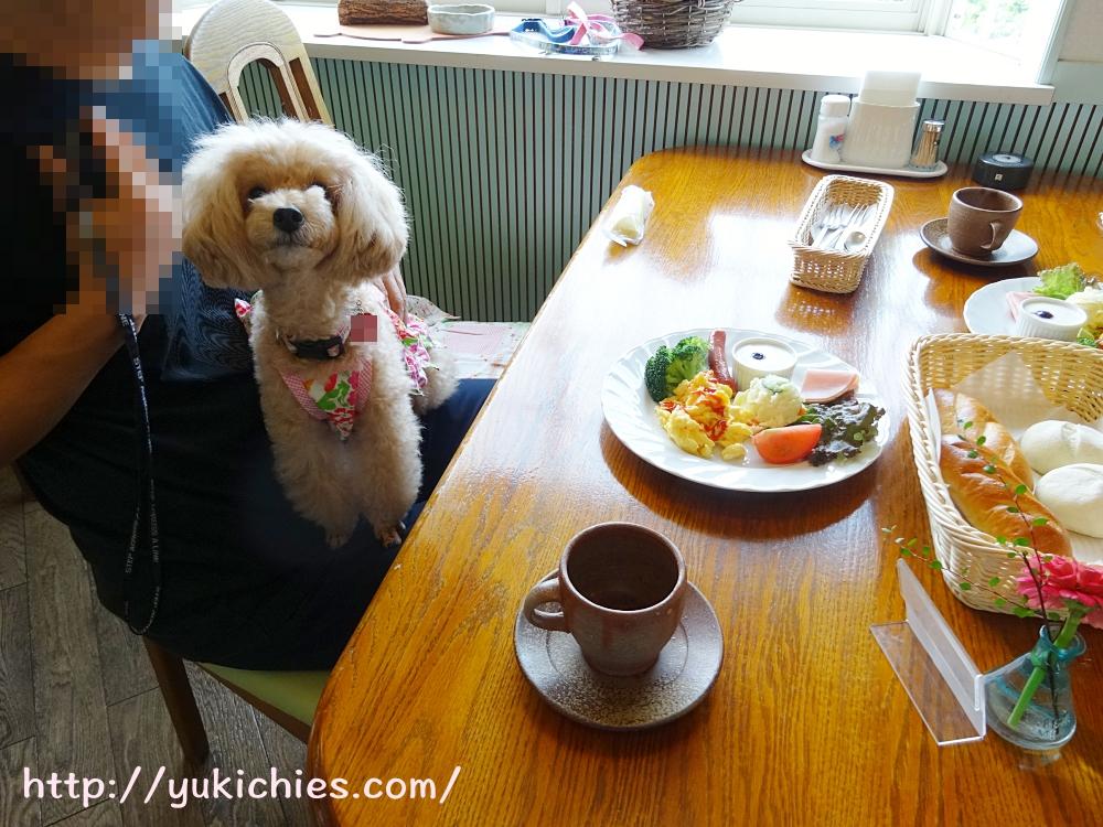 岡山県瀬戸内市牛窓 ワンちゃんと泊まる宿ラハイナ 朝食での杏