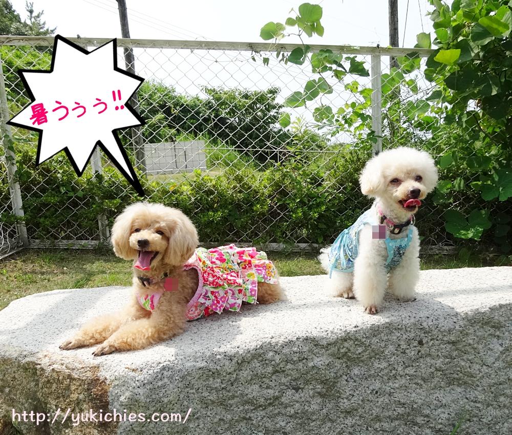 岡山県瀬戸内市牛窓 ワンちゃんと泊まる宿ラハイナ 記念撮影2