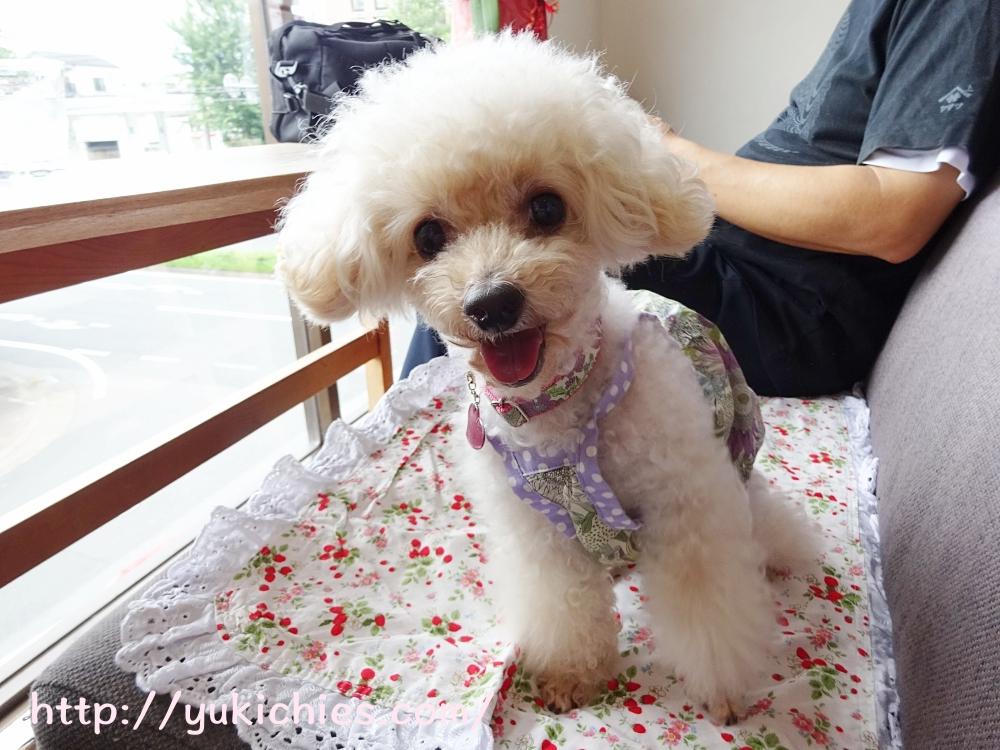京都 衣笠金閣寺の近くにあるcafe sora & Dog salon Wonderful 諭吉の写真
