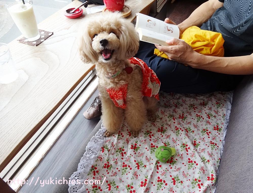 京都 衣笠金閣寺の近くにあるcafe sora & Dog salon Wonderful 杏ちゃん