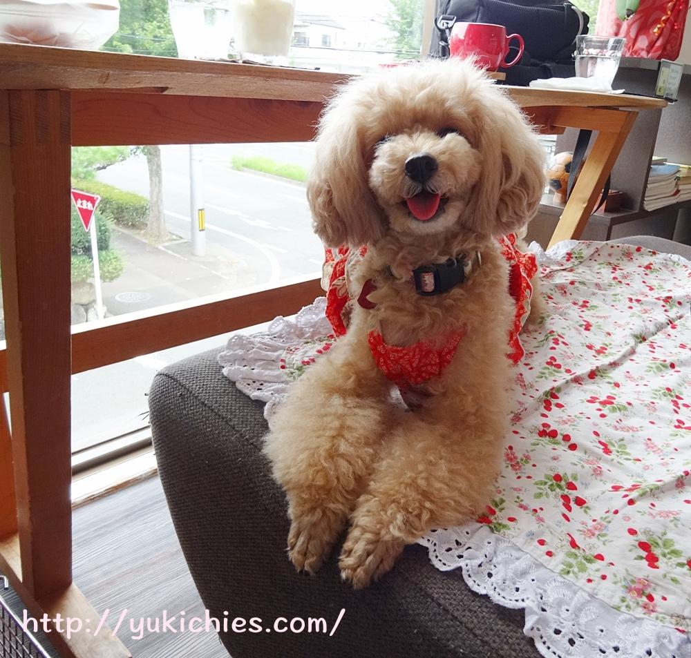京都 衣笠金閣寺の近くにあるcafe sora & Dog salon Wonderful 杏ちゃんのふせ