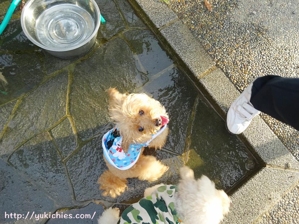 山陽自動車道 三木サービスエリア(上り)ドッグラン 杏の水遊び