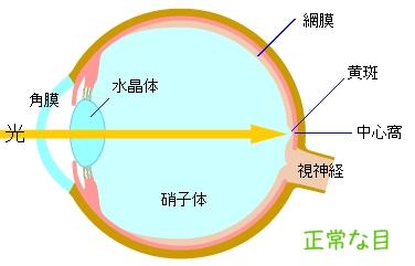 目の断面図(正常な目)
