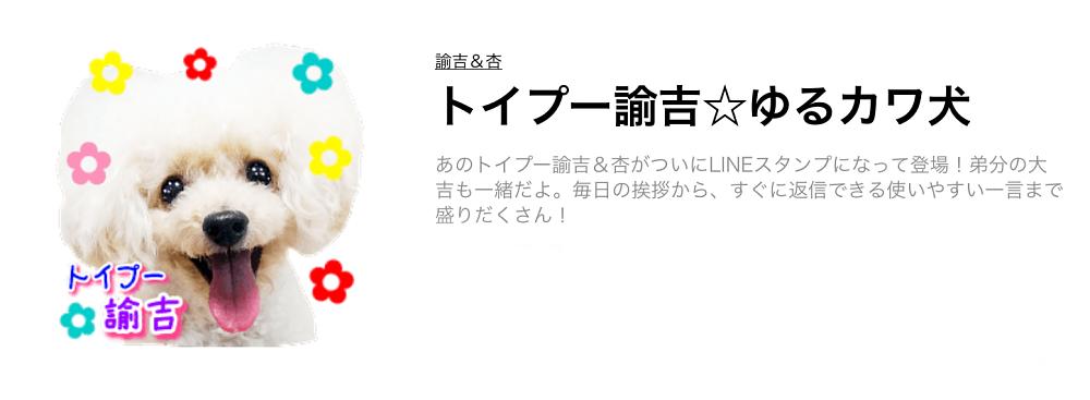 諭吉&杏 トイプー諭吉☆ゆるカワ犬