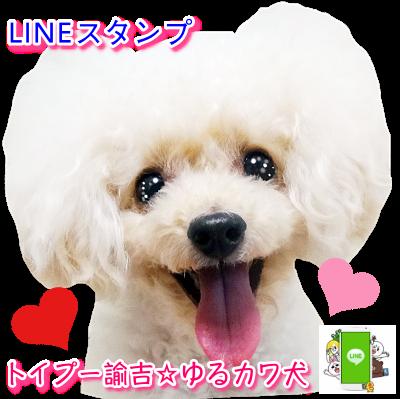 LINEスタンプ トイプー諭吉☆ゆるカワ犬