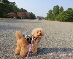 京都御所でお散歩 杏3