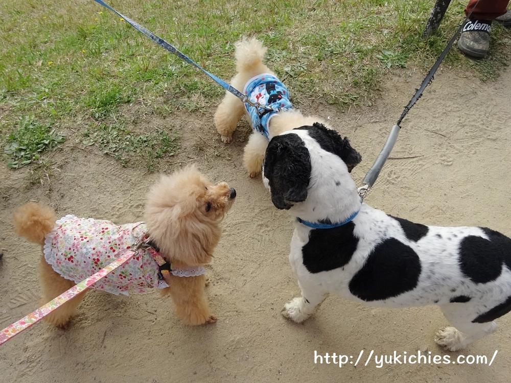 京都北山 半木の道(なからぎのみち)犬のご挨拶 杏ちゃん