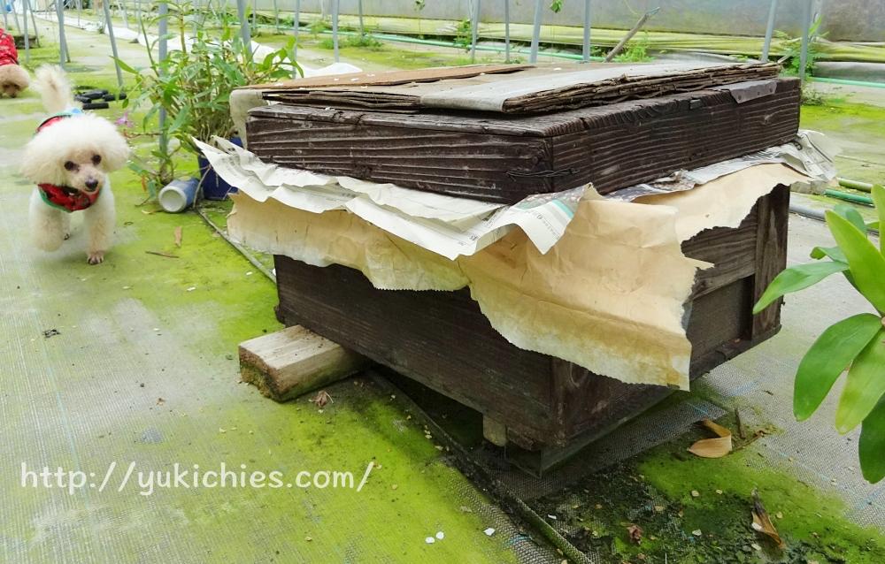 岡山県瀬戸内市牛窓 田淵いちご園 わんこも一緒に行ける、いちご狩り ミツバチの巣箱