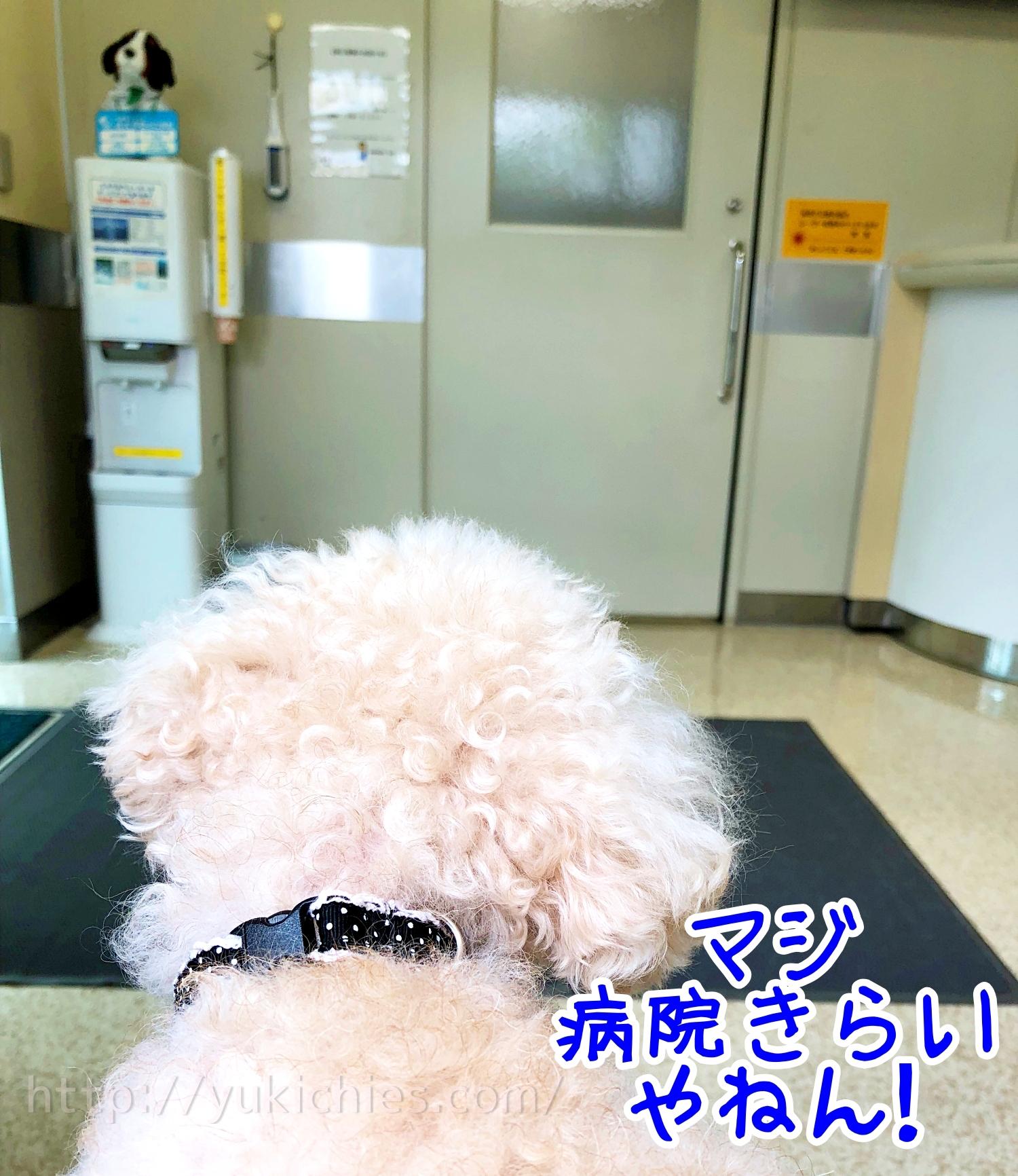 2018年9月5日諭吉が腹痛で動物病院へ 待合室
