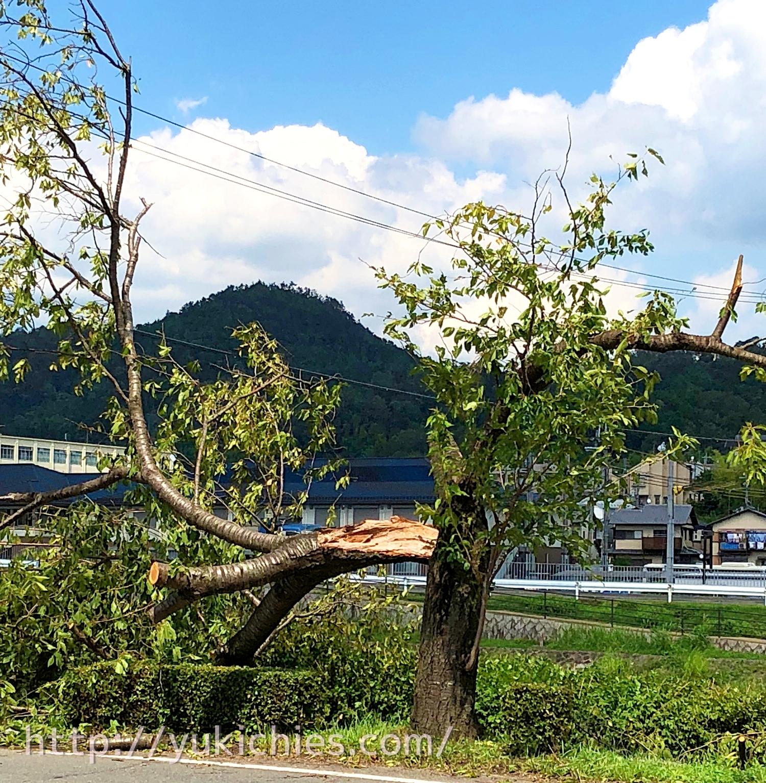 2018年9月5日台風21号京都鴨川 木が折れる