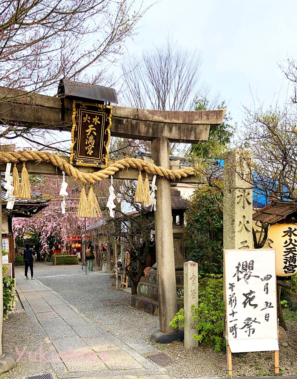 京都 堀川紫明 水火天満宮の桜 2020年