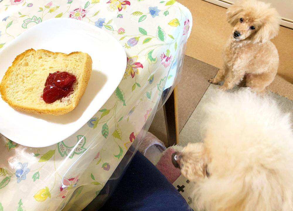 朝食のパンを見つめる諭吉&杏