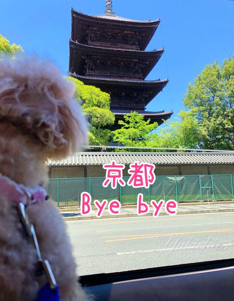 京都Bye bye トイプー杏ちゃん 岡山県倉敷&牛窓、2泊3日の旅行