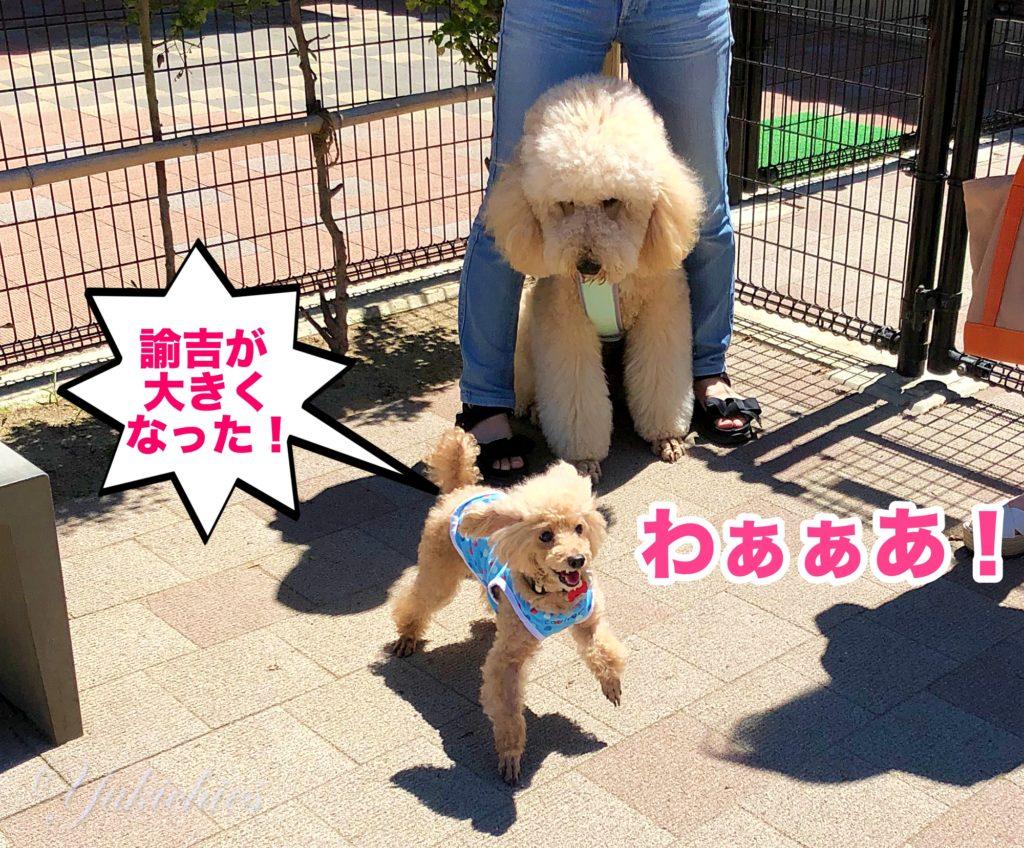 宝塚北サービスエリア 新名神高速道路 ドッグラン 諭吉が大きくなった!