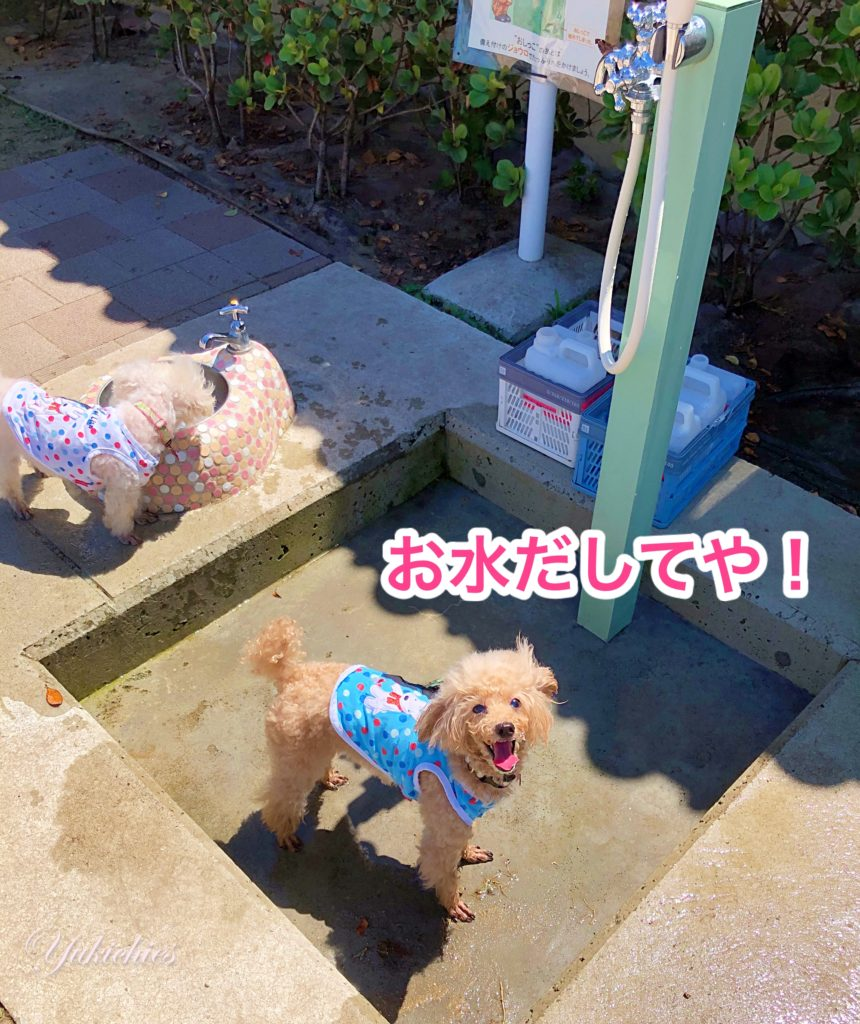 宝塚北サービスエリア 新名神高速道路 ドッグラン 水遊び大好きな杏ちゃん