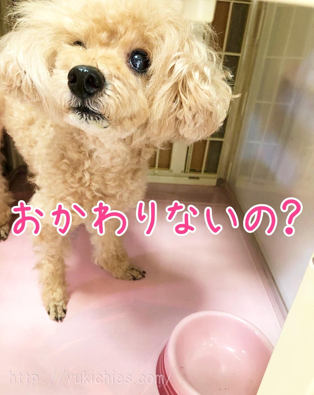 トイプー杏ちゃん『おかわりないの?』