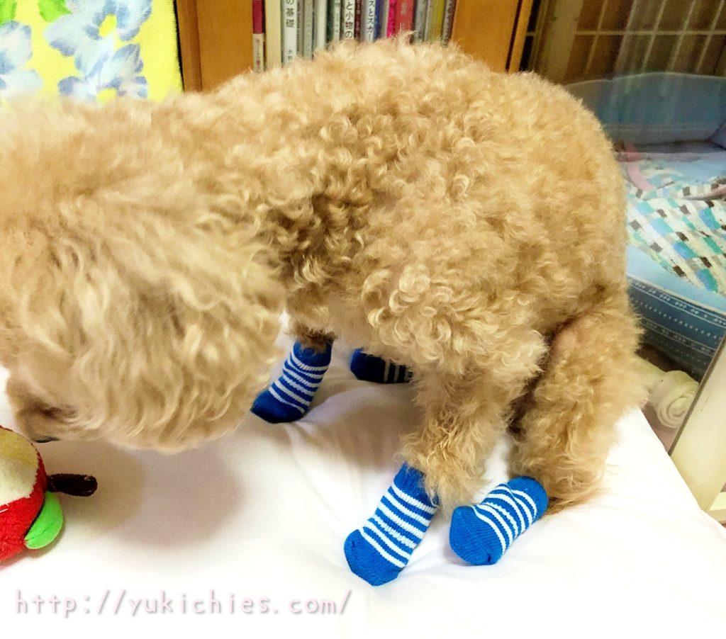 犬 おもちゃのりんご
