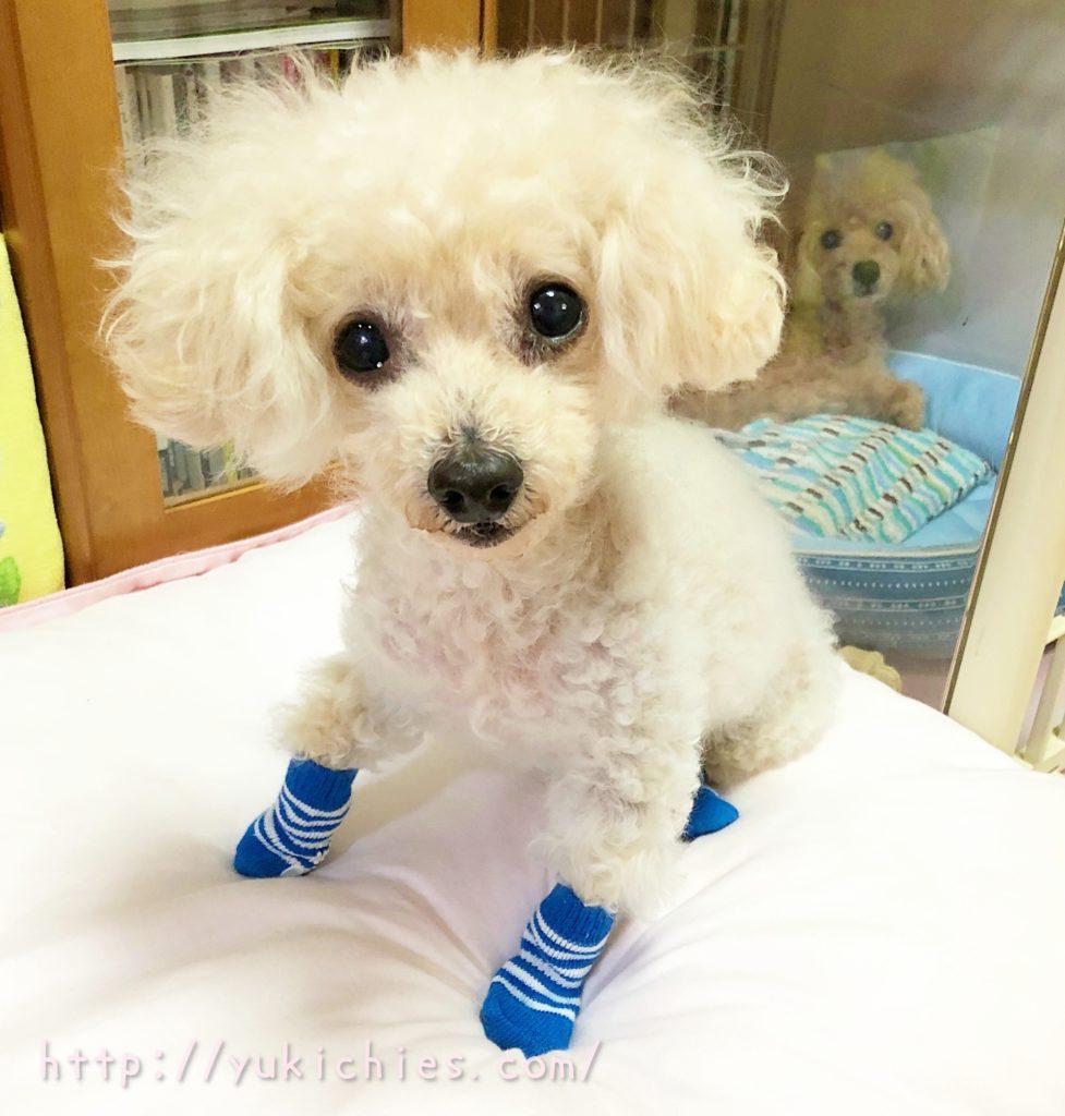 ダイソーの犬の靴下