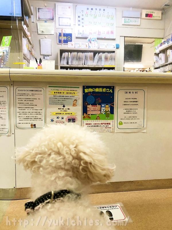 動物病院待合室 諭吉 トイプードル