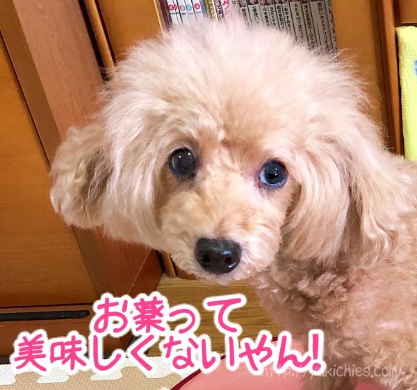 犬に薬を飲ませるための必勝法!【今まで試した結果を全てご報告】