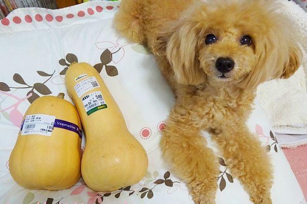 バターナッツかぼちゃ(Butternut squash)とトイプー杏