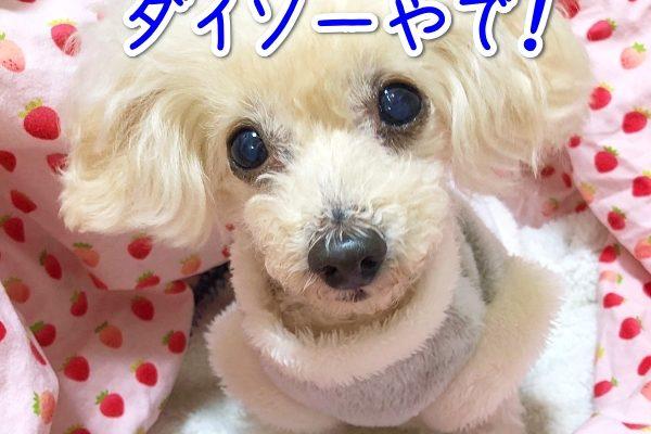 ダイソーの犬グッズ、ペットショップ並みの品ぞろえ!【2020年】